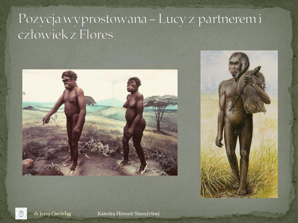 Pozycja wyprostowana – Lucy z partnerem i człowiek z Flores