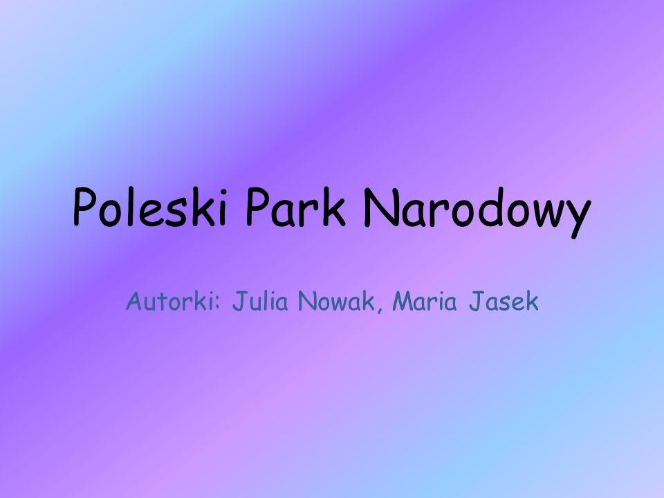 Autorki: Julia Nowak, Maria Jasek