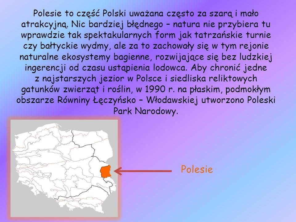 Polesie to część Polski uważana często za szarą i mało atrakcyjną