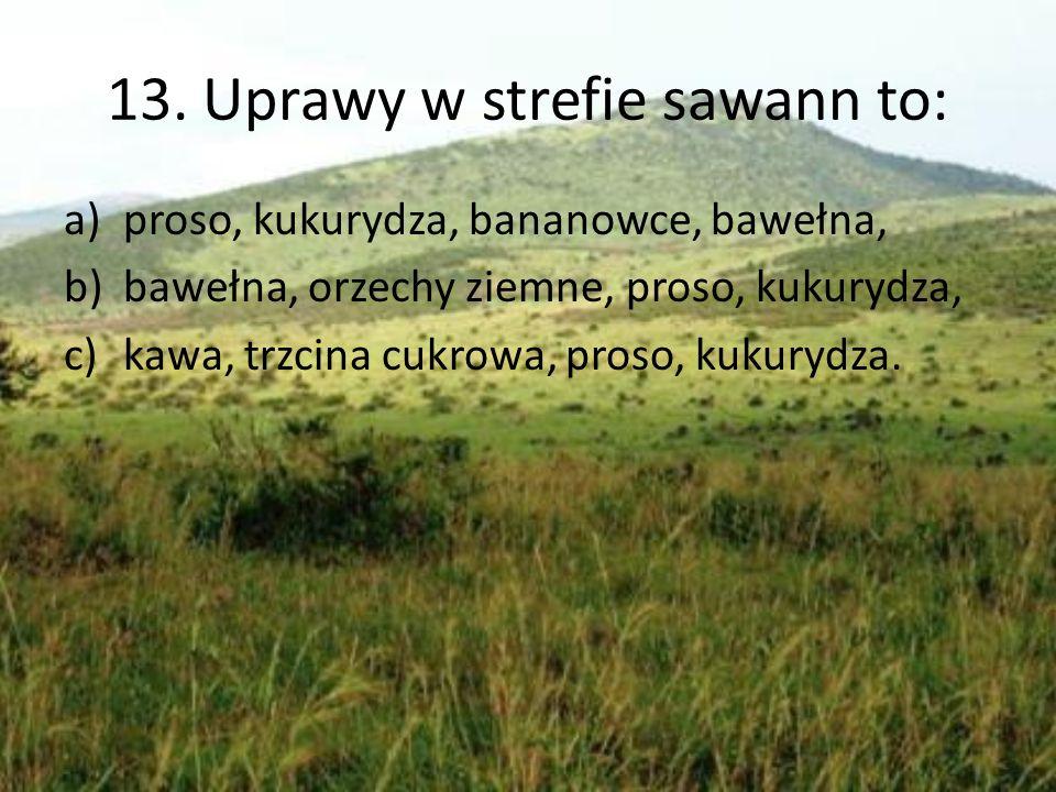 13. Uprawy w strefie sawann to: