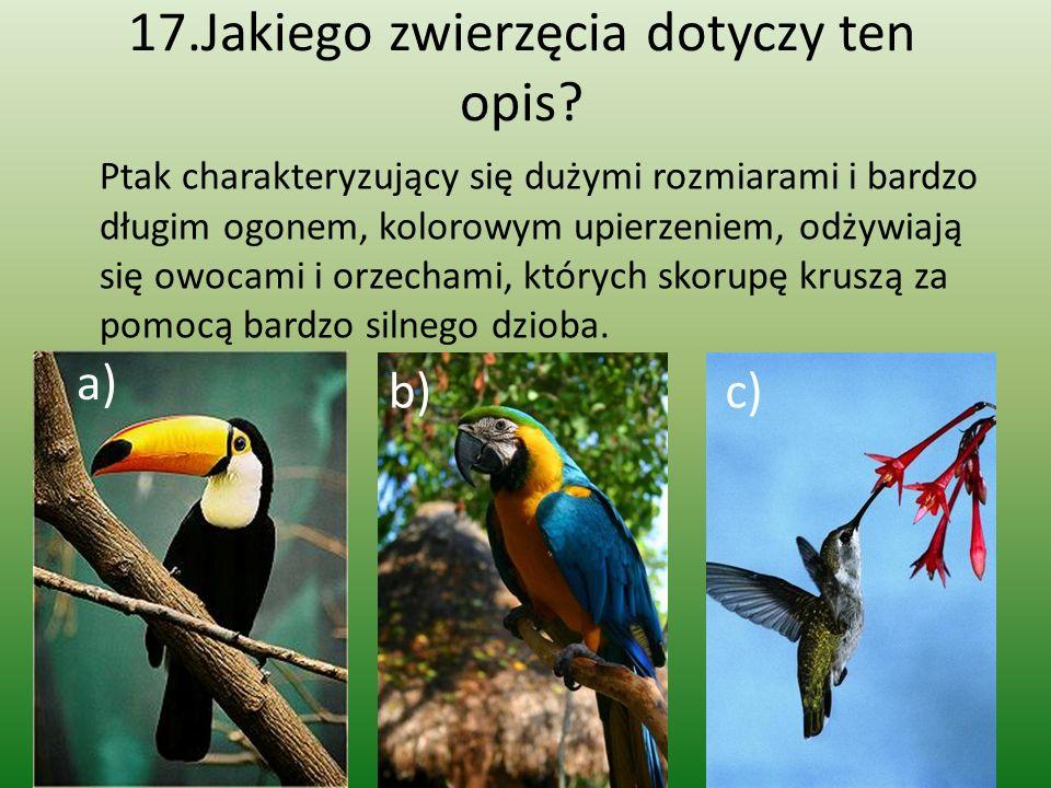 17.Jakiego zwierzęcia dotyczy ten opis