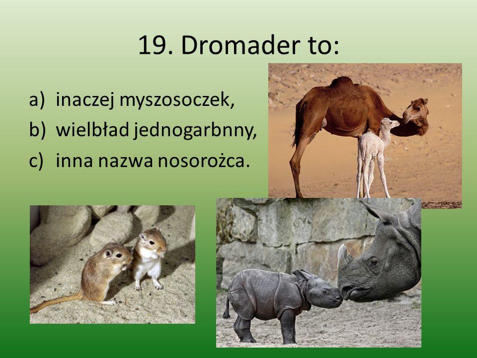 19. Dromader to: inaczej myszosoczek, wielbład jednogarbnny,