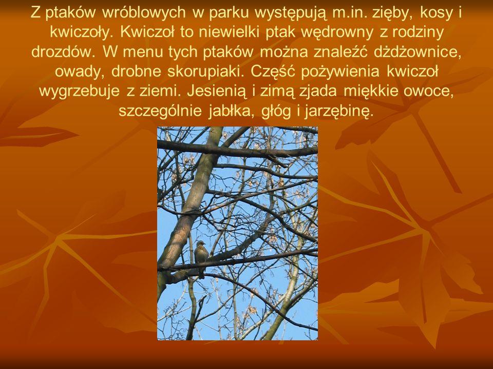 Z ptaków wróblowych w parku występują m. in. zięby, kosy i kwiczoły