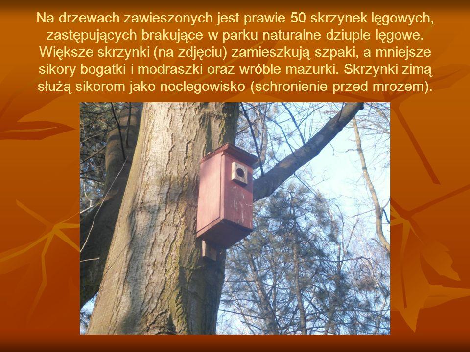 Na drzewach zawieszonych jest prawie 50 skrzynek lęgowych, zastępujących brakujące w parku naturalne dziuple lęgowe.