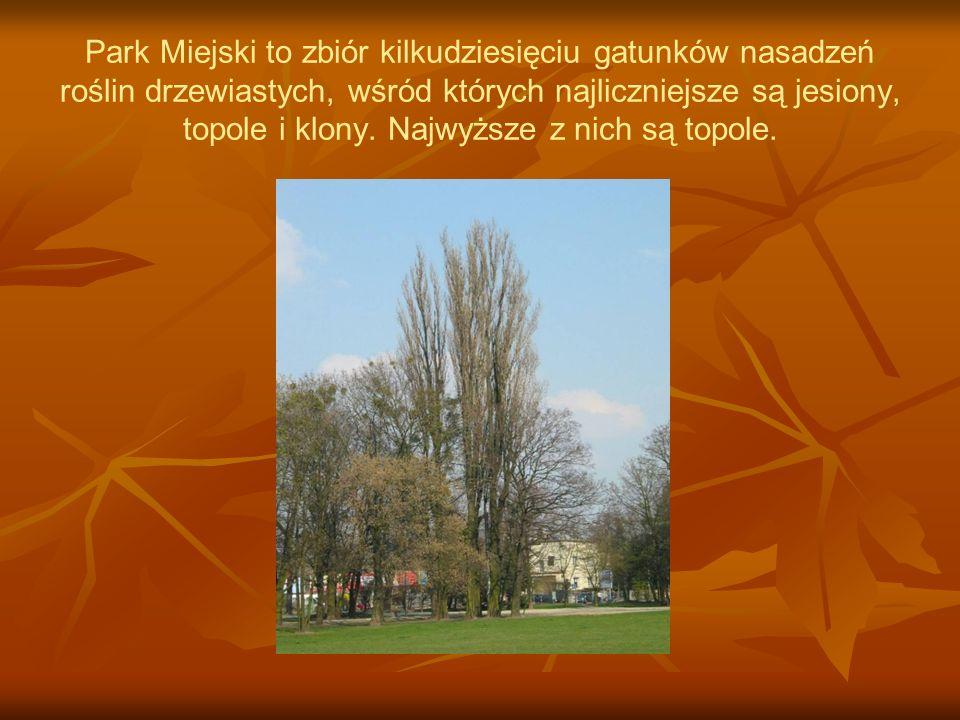 Park Miejski to zbiór kilkudziesięciu gatunków nasadzeń roślin drzewiastych, wśród których najliczniejsze są jesiony, topole i klony.