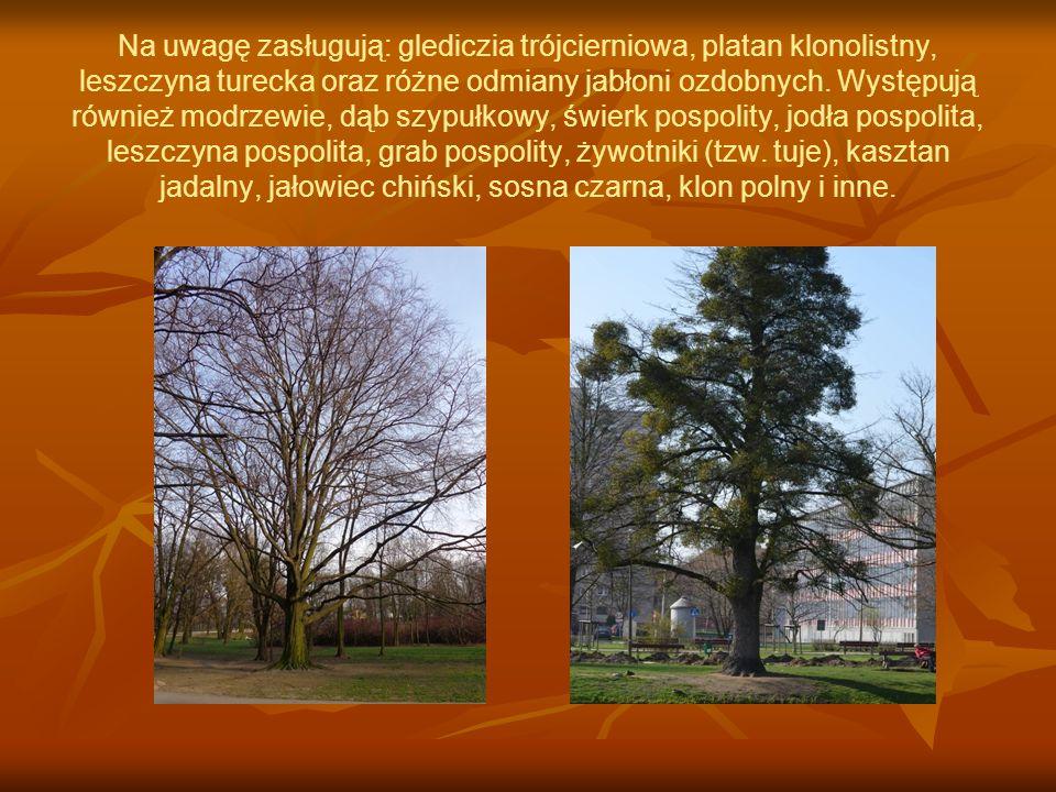 Na uwagę zasługują: glediczia trójcierniowa, platan klonolistny, leszczyna turecka oraz różne odmiany jabłoni ozdobnych.