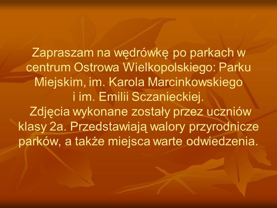 Zapraszam na wędrówkę po parkach w centrum Ostrowa Wielkopolskiego: Parku Miejskim, im.