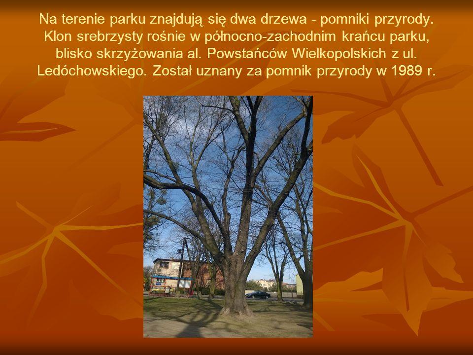 Na terenie parku znajdują się dwa drzewa - pomniki przyrody