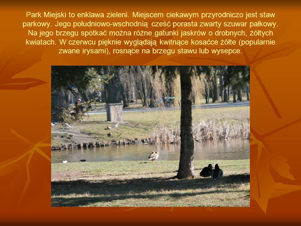 Park Miejski to enklawa zieleni