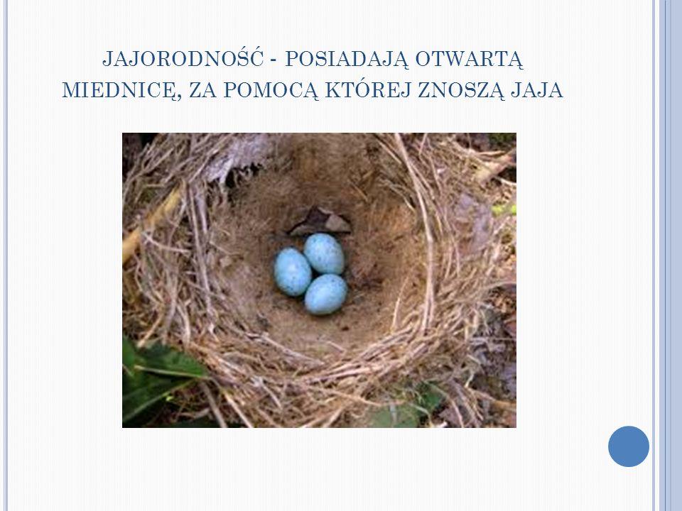 jajorodność - posiadają otwartą miednicę, za pomocą której znoszą jaja