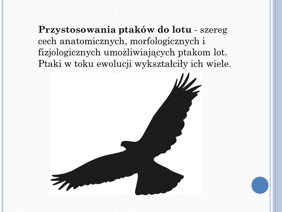 Przystosowania ptaków do lotu - szereg cech anatomicznych, morfologicznych i fizjologicznych umożliwiających ptakom lot.