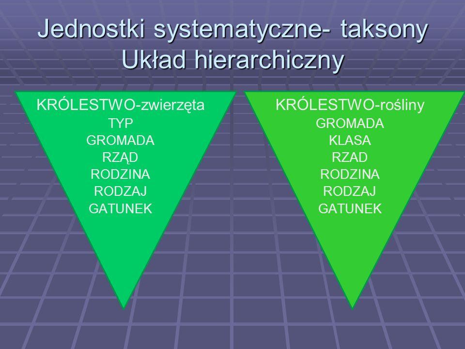 Jednostki systematyczne- taksony Układ hierarchiczny