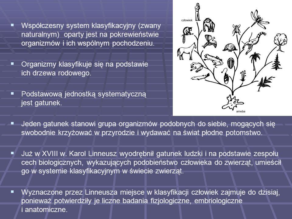 Współczesny system klasyfikacyjny (zwany naturalnym) oparty jest na pokrewieństwie organizmów i ich wspólnym pochodzeniu.