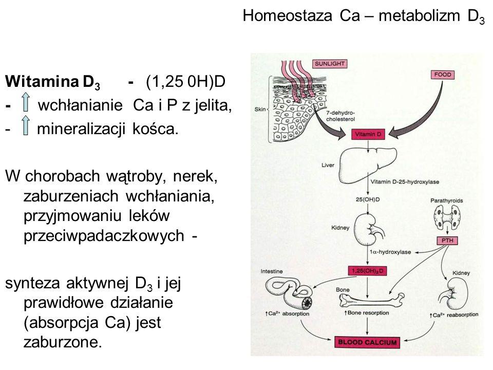 Homeostaza Ca – metabolizm D3