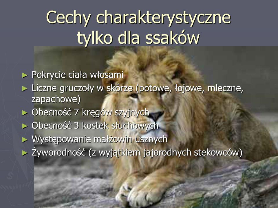 Cechy charakterystyczne tylko dla ssaków