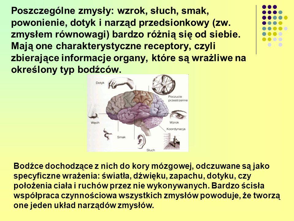 Poszczególne zmysły: wzrok, słuch, smak, powonienie, dotyk i narząd przedsionkowy (zw. zmysłem równowagi) bardzo różnią się od siebie. Mają one charakterystyczne receptory, czyli zbierające informacje organy, które są wrażliwe na określony typ bodźców.