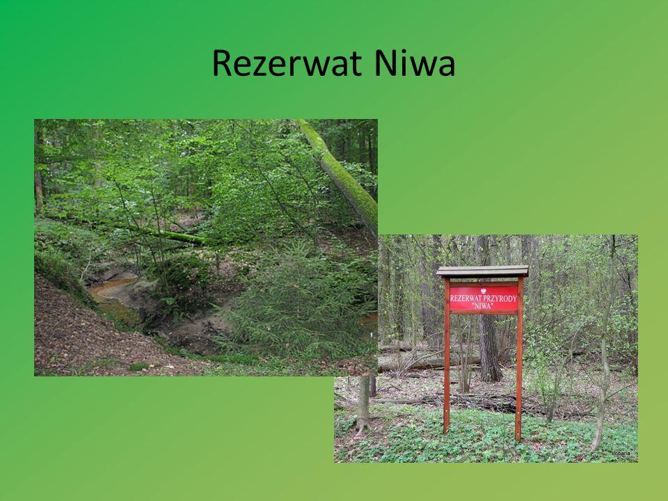 Rezerwat Niwa