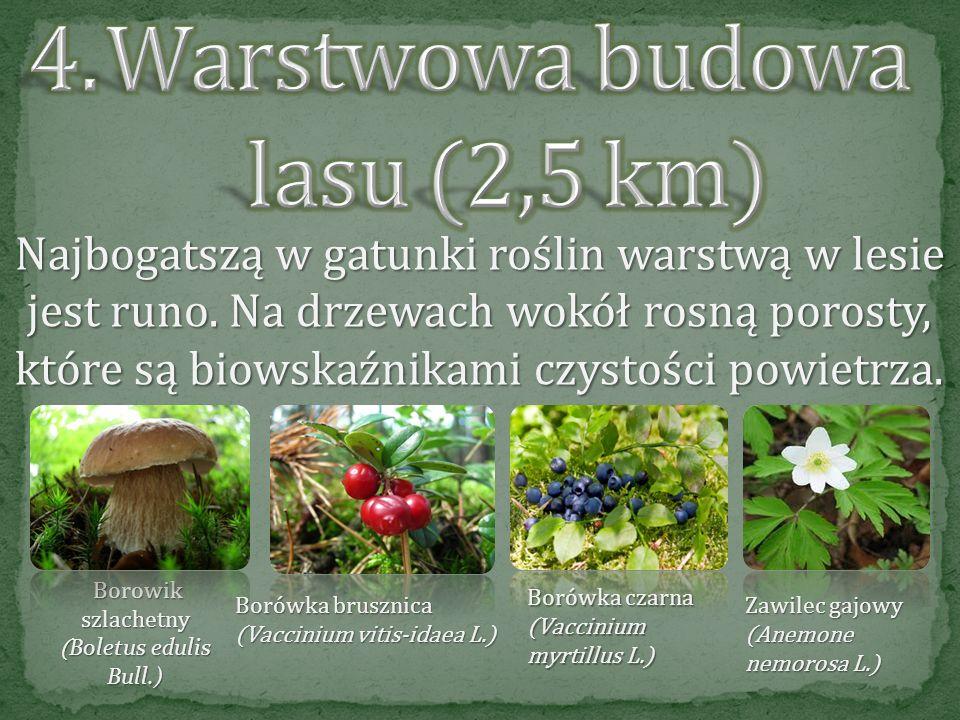 Warstwowa budowa lasu (2,5 km)