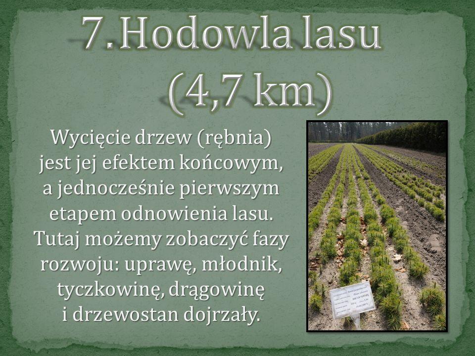 Hodowla lasu (4,7 km)