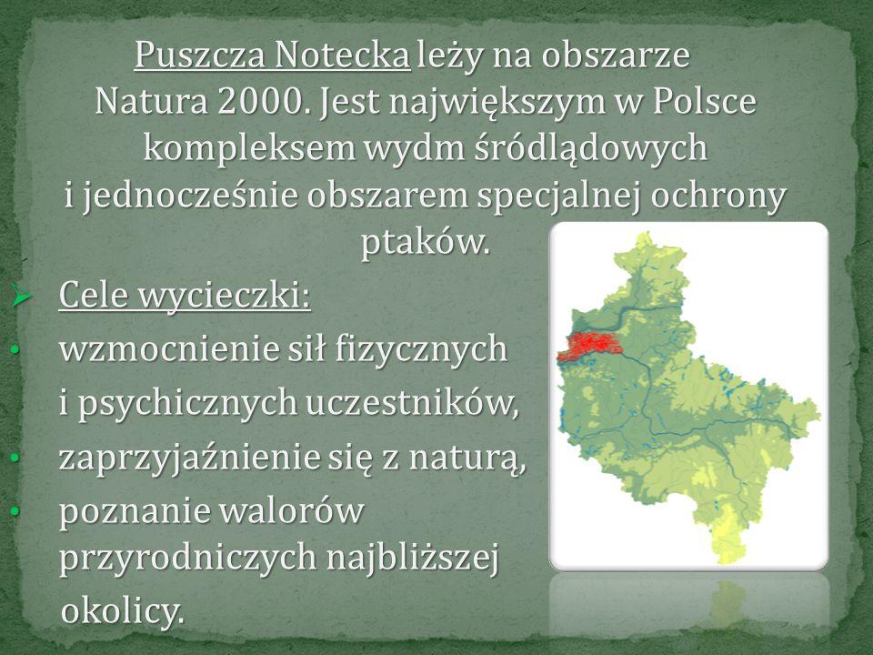 Puszcza Notecka leży na obszarze Natura 2000