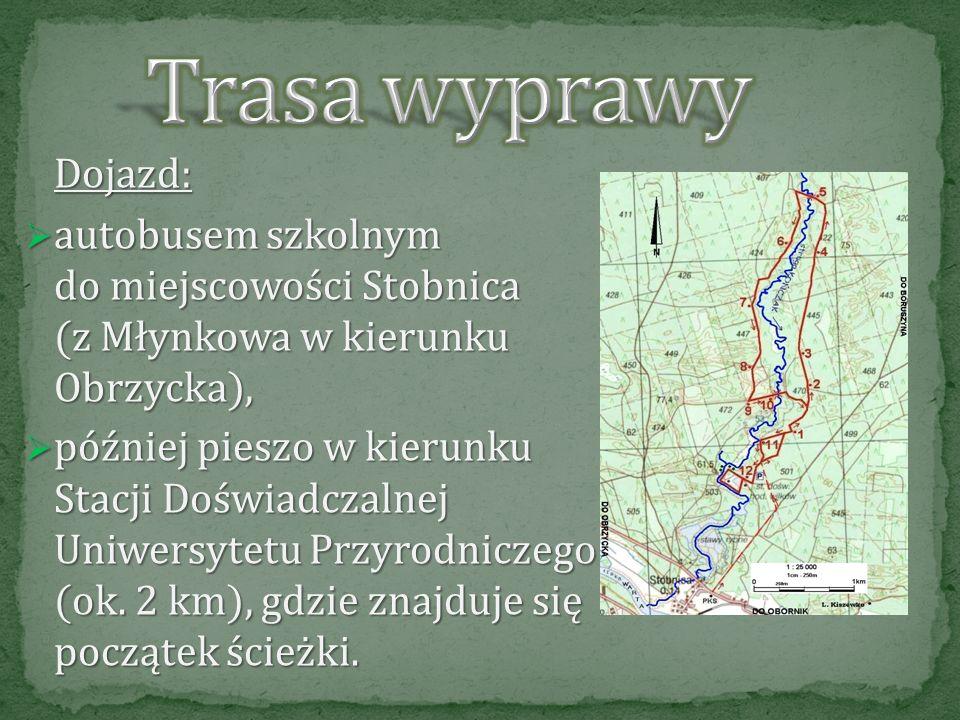 Trasa wyprawy Dojazd: autobusem szkolnym do miejscowości Stobnica (z Młynkowa w kierunku Obrzycka),