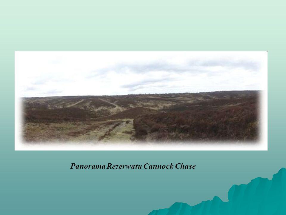 Panorama Rezerwatu Cannock Chase