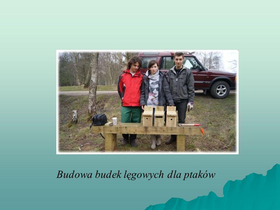 Budowa budek lęgowych dla ptaków