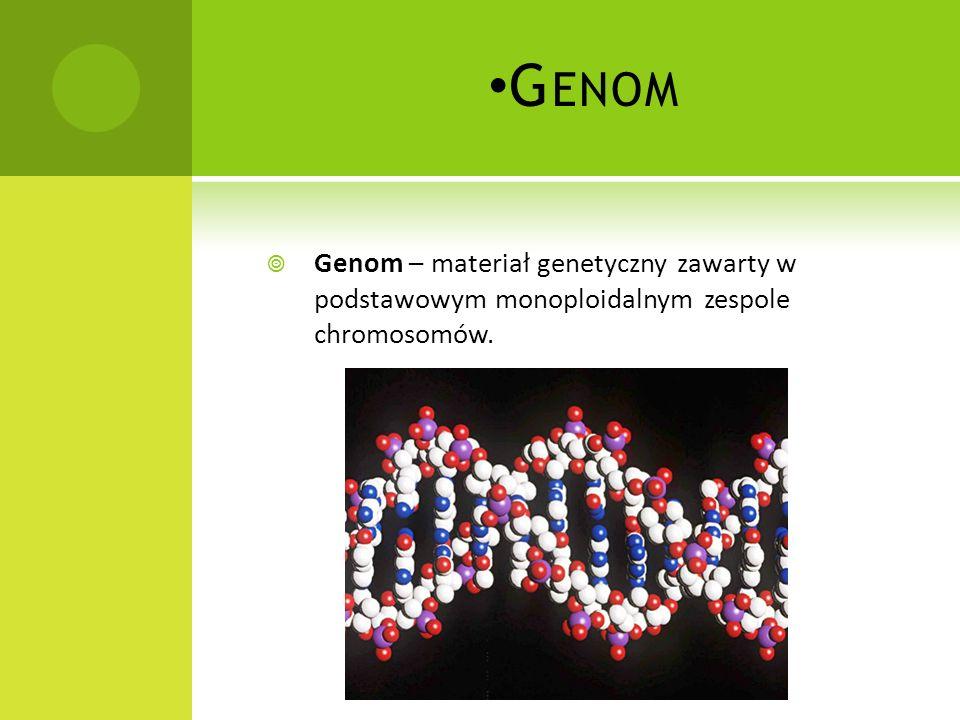 Genom Genom – materiał genetyczny zawarty w podstawowym monoploidalnym zespole chromosomów.