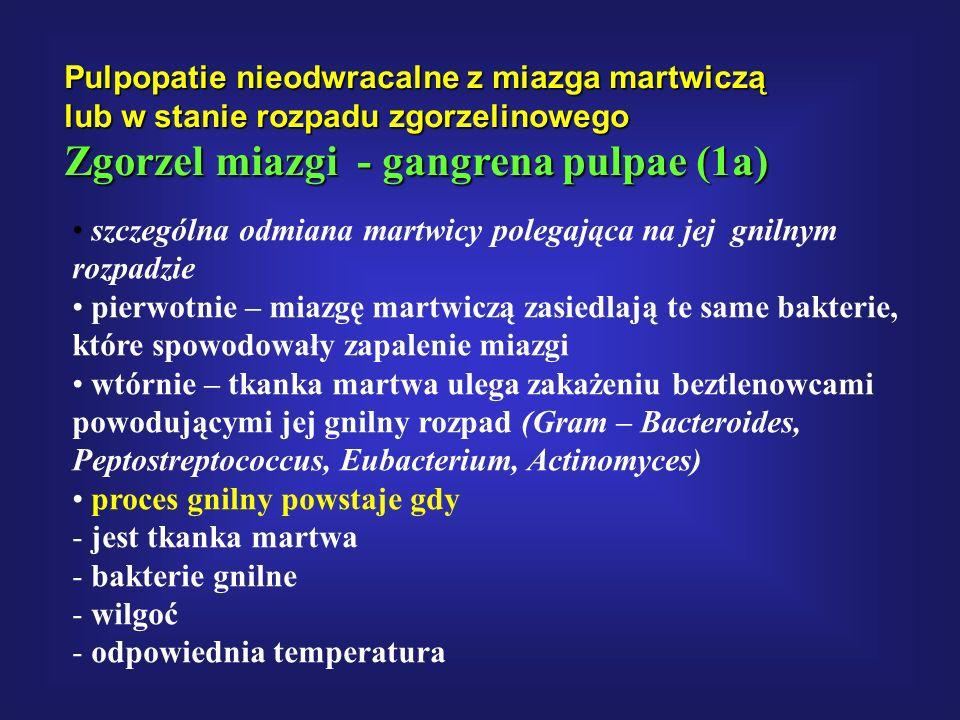 Zgorzel miazgi - gangrena pulpae (1a)