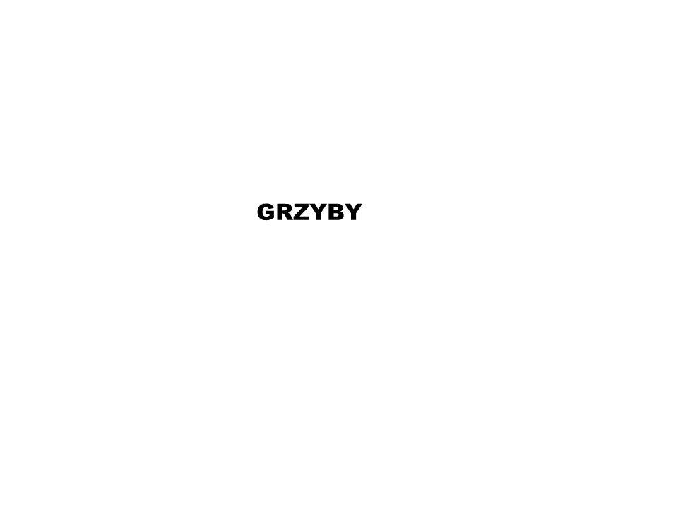 GRZYBY