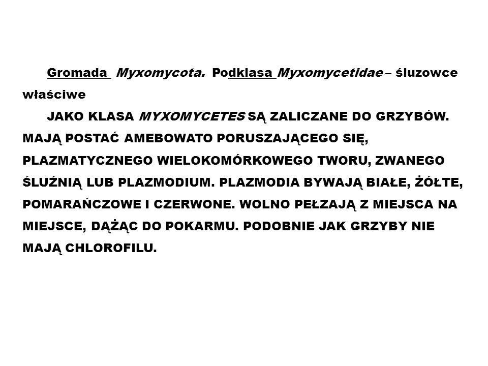 Gromada Myxomycota. Podklasa Myxomycetidae – śluzowce właściwe