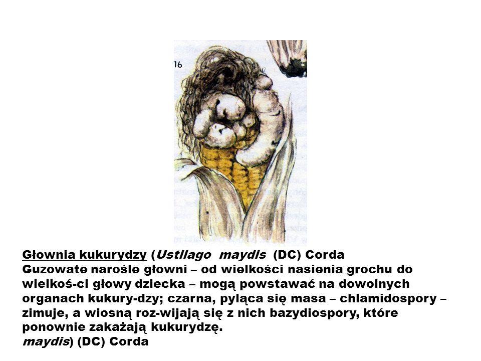 Głownia kukurydzy (Ustilago maydis (DC) Corda