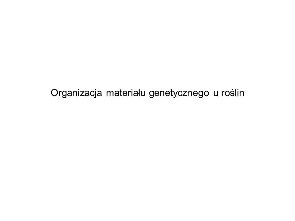 Organizacja materiału genetycznego u roślin