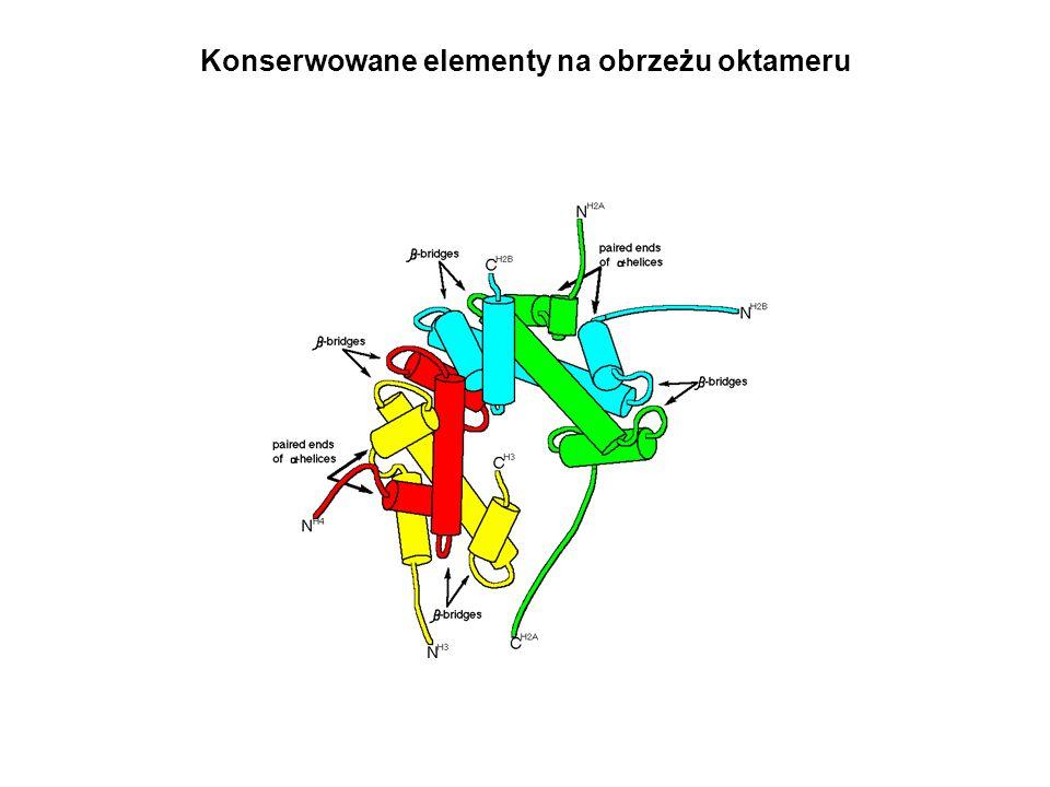 Konserwowane elementy na obrzeżu oktameru