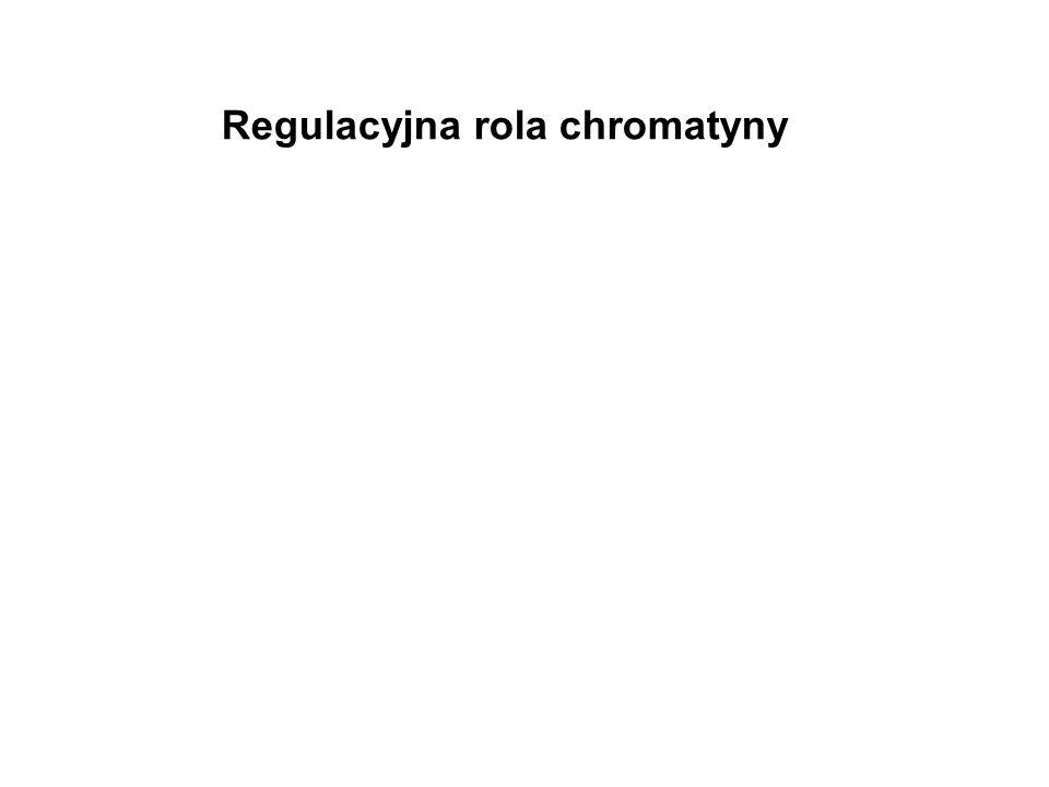Regulacyjna rola chromatyny