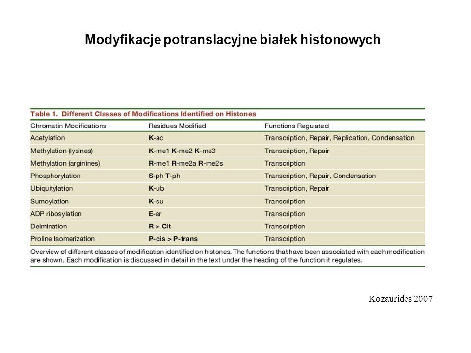 Modyfikacje potranslacyjne białek histonowych