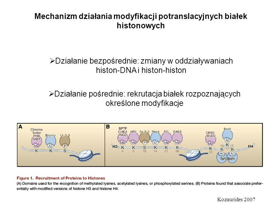 Mechanizm działania modyfikacji potranslacyjnych białek histonowych