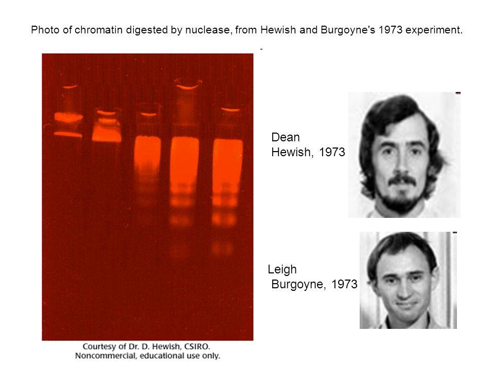 Dean Hewish, 1973 Leigh Burgoyne, 1973