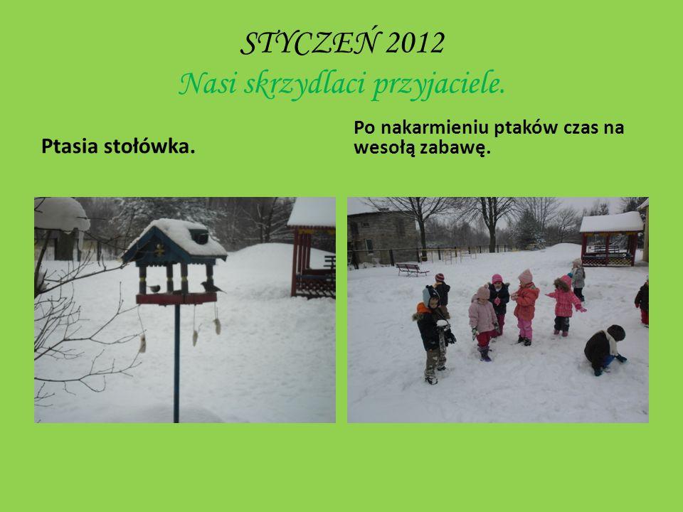 STYCZEŃ 2012 Nasi skrzydlaci przyjaciele.