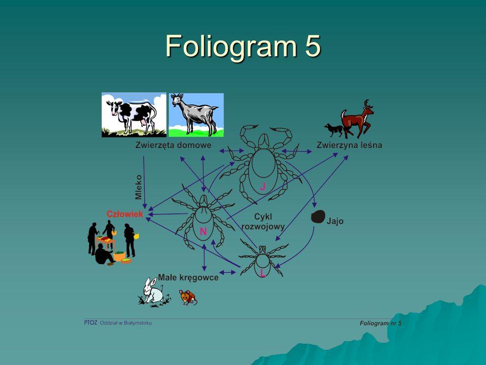 Foliogram 5