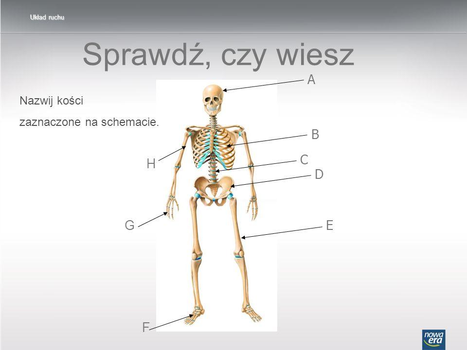 Sprawdź, czy wiesz A B H C D G E F Nazwij kości