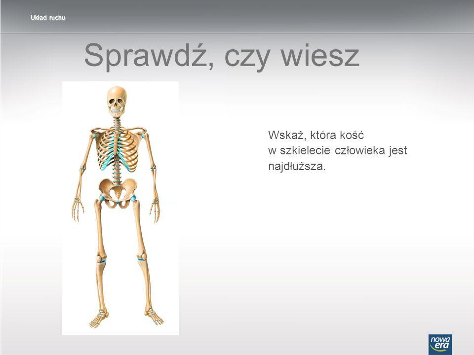 Sprawdź, czy wiesz Wskaż, która kość