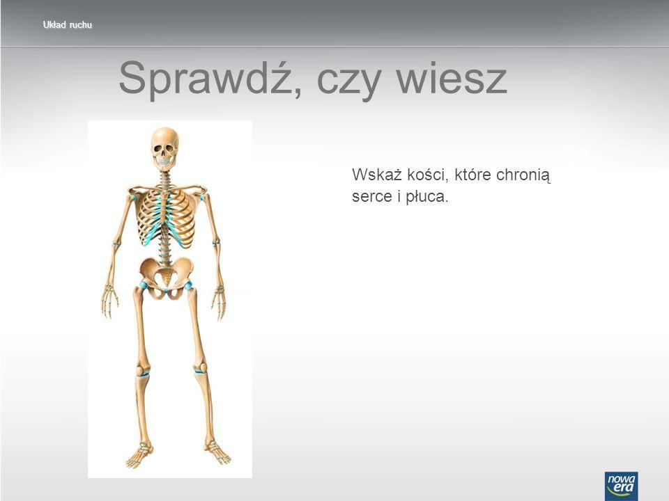 Sprawdź, czy wiesz Wskaż kości, które chronią serce i płuca.