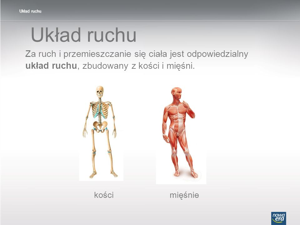 Układ ruchu Układ ruchu. Za ruch i przemieszczanie się ciała jest odpowiedzialny układ ruchu, zbudowany z kości i mięśni.