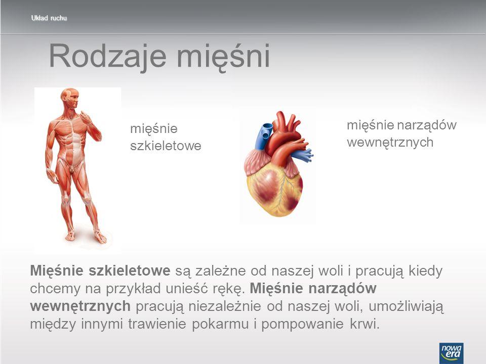 Układ ruchu Rodzaje mięśni. mięśnie narządów wewnętrznych. mięśnie szkieletowe.