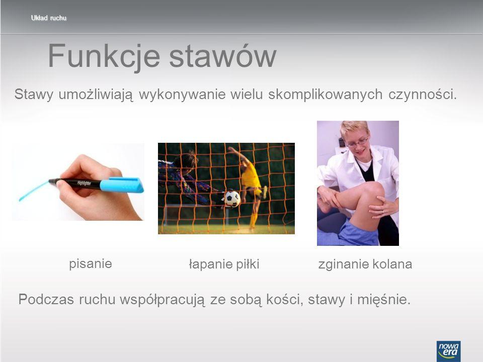 Układ ruchu Funkcje stawów. Stawy umożliwiają wykonywanie wielu skomplikowanych czynności. pisanie.