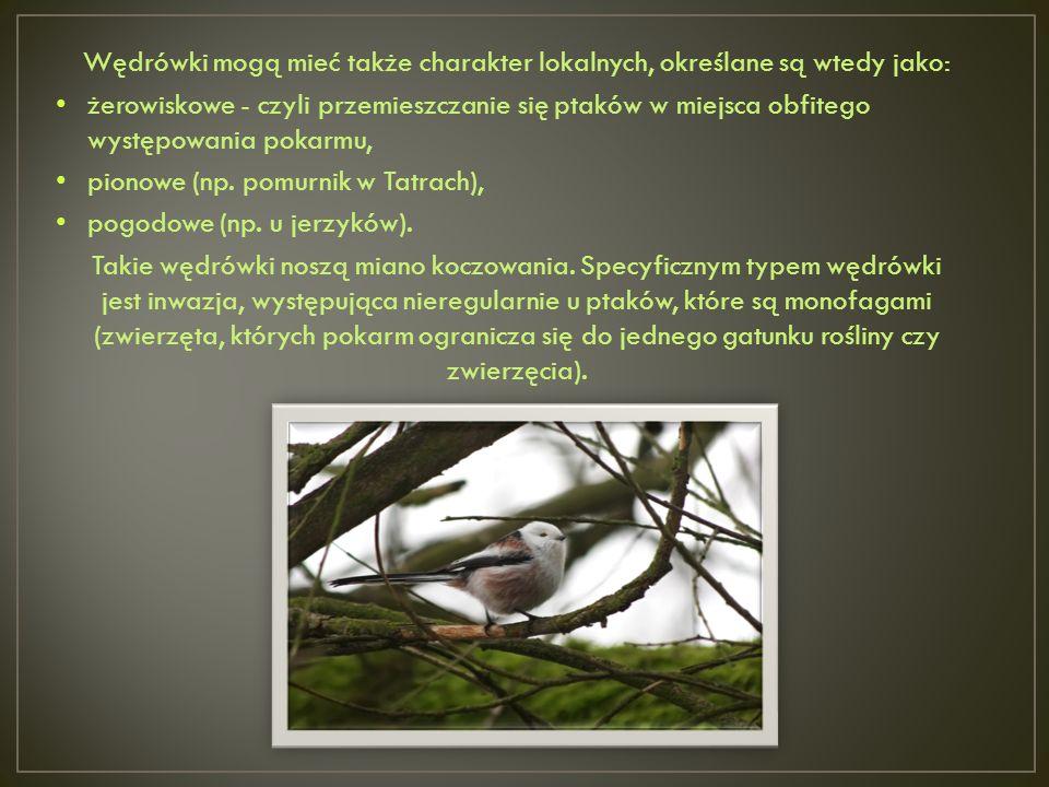Wędrówki mogą mieć także charakter lokalnych, określane są wtedy jako:
