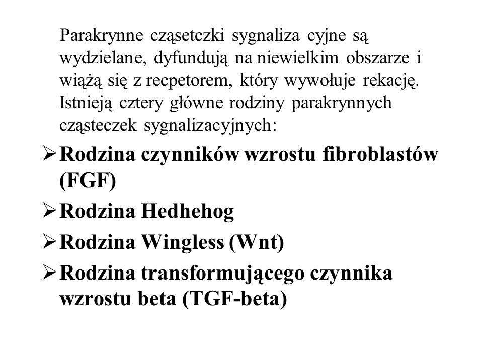 Rodzina czynników wzrostu fibroblastów (FGF) Rodzina Hedhehog