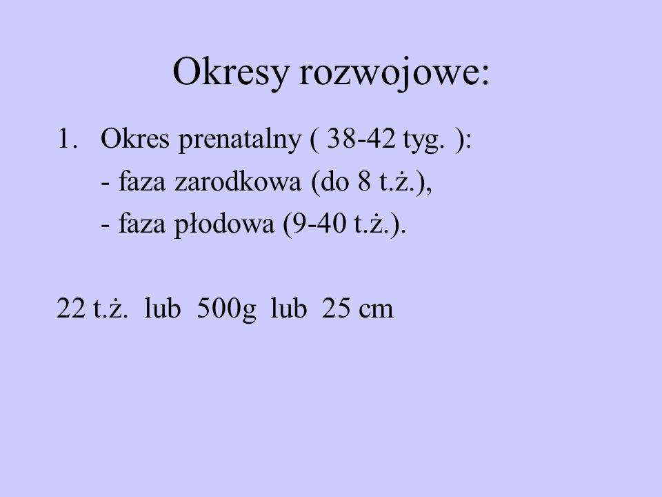 Okresy rozwojowe: Okres prenatalny ( 38-42 tyg. ):