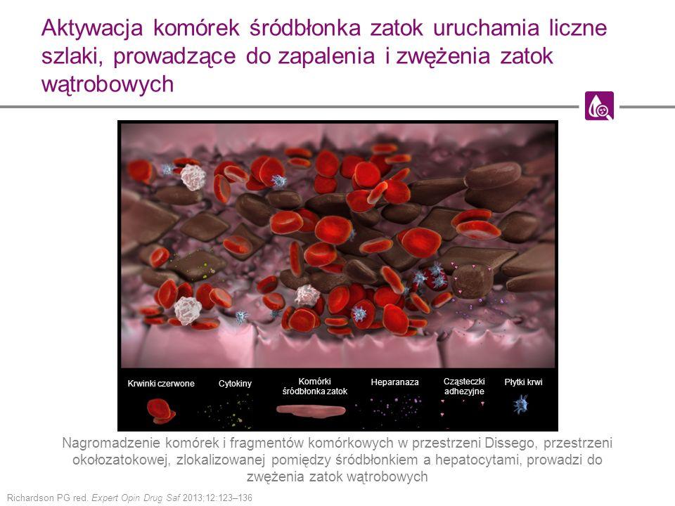 Komórki śródbłonka zatok